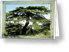 Do-00512 Cedar Forest Greeting Card
