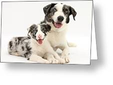 Dog And Puppy Greeting Card