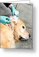 Dog Grooming Greeting Card
