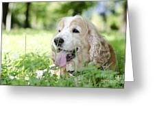 Dog On The Green Grass Greeting Card