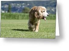 Dog Walking Greeting Card