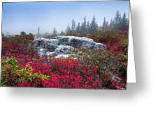 Dolly Sods Wilderness Greeting Card