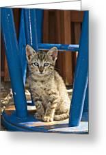Domestic Cat Felis Catus Kitten, Germany Greeting Card
