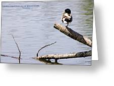 Duck On A Log Greeting Card