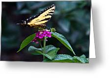 Eastern Tiger Swallowtail 3 Greeting Card