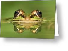 Edible Frog Rana Esculenta Greeting Card
