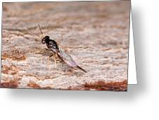 Emerald Ash Borer Parasite Greeting Card