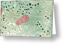 Endoplasmic Reticulum Greeting Card