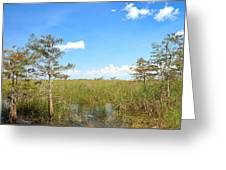 Everglades Landscape Greeting Card