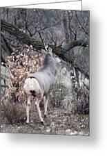 Fall Buck Greeting Card