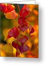 Fall Color 1 Greeting Card