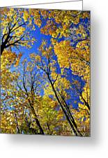 Fall Maple Trees Greeting Card