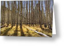 Fall On The Mountain  Greeting Card