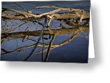 Fallen Tree Trunk With Reflections On The Muskegon River Greeting Card