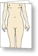 Female, Full Anterior View Greeting Card