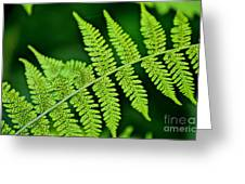 Fern Seed Greeting Card