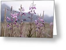 Fireweed In A Sea Of Grass Greeting Card