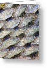 Fish Scales Background Greeting Card