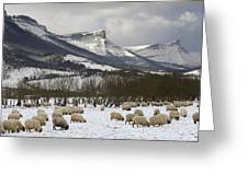 Flock Of Sheep In The Snow Greeting Card