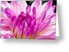 Flower 11 Greeting Card