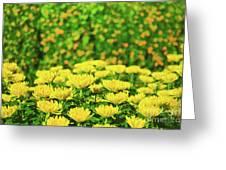 Flower Market Greeting Card