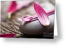 Flower Petals Greeting Card
