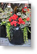 Flower Pots ........ 12 Greeting Card