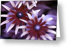 Flower Rudbeckia Fulgida In Uv Light Greeting Card by Ted Kinsman