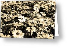 Flowers In Sepia Tone Greeting Card