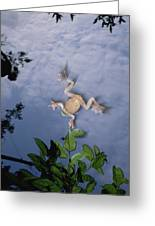 Foam Nest Tree Frog Polypedates Dennysi Greeting Card