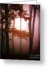 Foggy Misty Trees Greeting Card