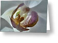 Foral Privacy Greeting Card