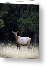 Forest Elk Greeting Card
