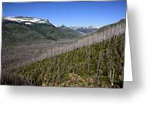 Forest Fire Sticks-1 Greeting Card