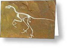 Fossil Of Archaeopterix, One Of The First Birds Greeting Card