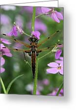 Four-spotted Skimmer Greeting Card