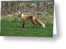 Fox With Dinner Greeting Card