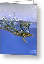 Frog Jumps Into Water Greeting Card