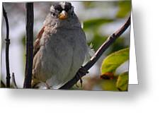 Gambel's White Crowned Sparrow Greeting Card