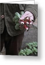 Gardener Holding Freshly Picked Radishes Greeting Card
