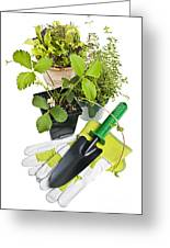 Gardening Tools And Plants Greeting Card