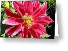 Gathering Nectar Greeting Card