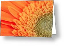 Gerbera Greeting Card