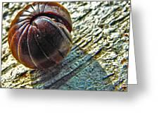 Giant Pill Bug Greeting Card