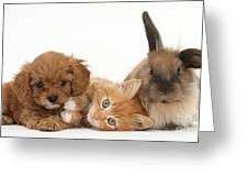 Ginger Kitten With Cavapoo Pup Greeting Card