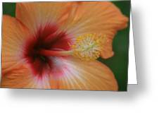 Gods Garden Greeting Card