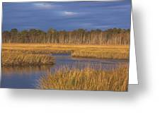 Golden Marsh Greeting Card