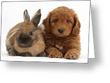 Goldendoodle Puppy And Rabbit Greeting Card