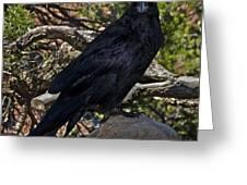 Grand Canyon Raven Greeting Card