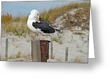 Great Black-backed Gull    Larus Marinus Greeting Card
